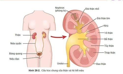 Biểu hiện và phương pháp điều trị viêm nhiễm đường tiết niệu tại bạn gái 46244862_1567676982708